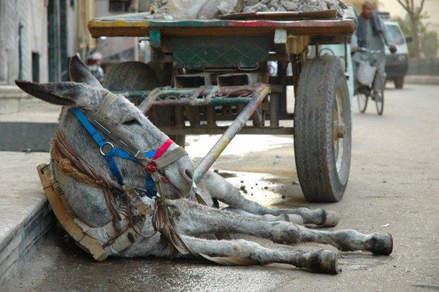 resting_donkey